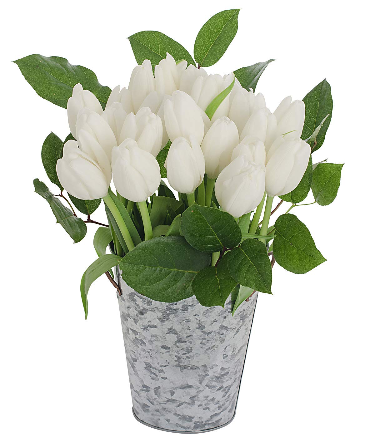 Stargazer Barn Serenity Bouquet 2 Dozen White Tulips with French Bucket Style Vase by Stargazer Barn