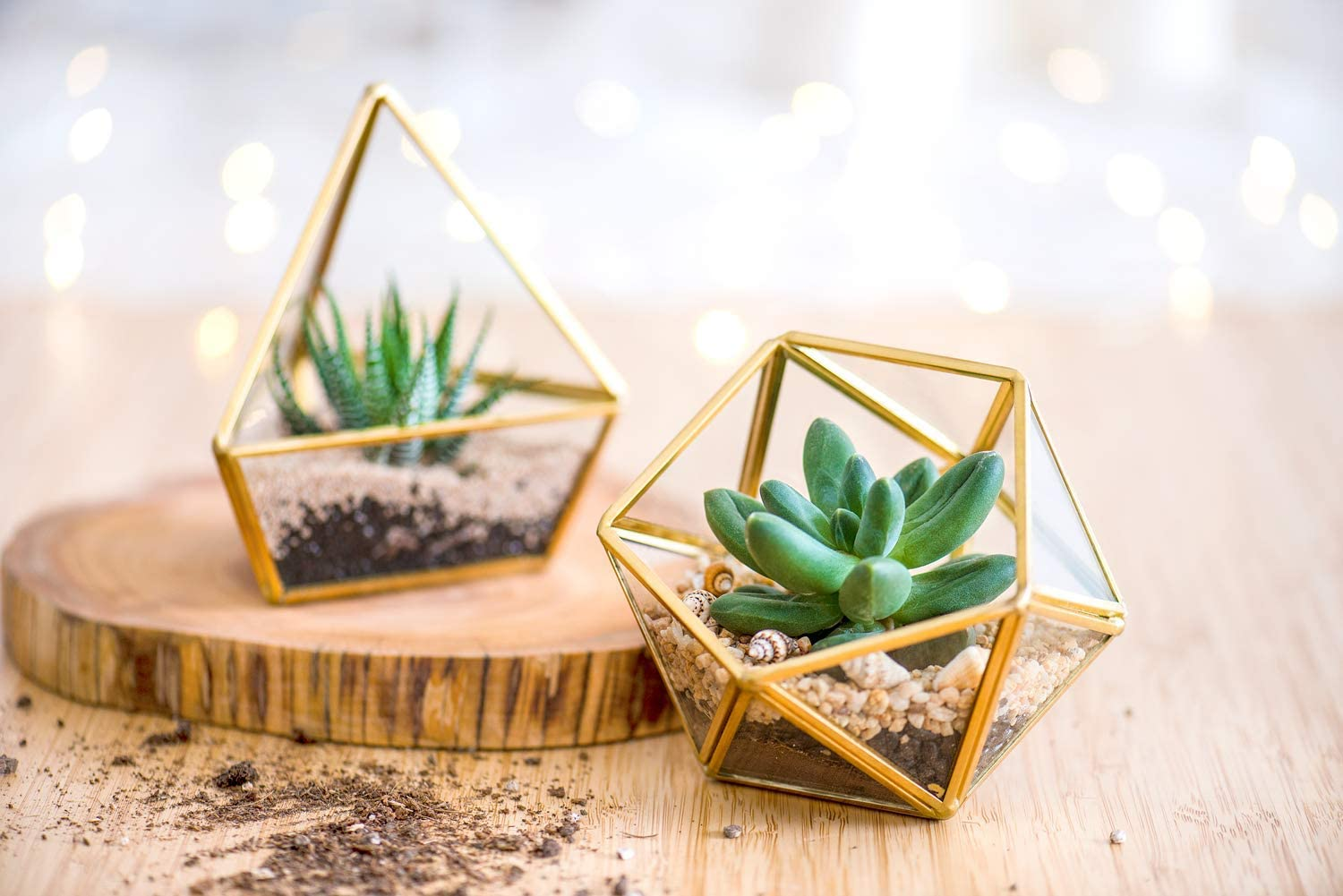 Fairy Garden Gold Mkouo 3 Packs Mini Glass Geometric Terrarium Container Modern Table Planter Windowsill Decor Floating