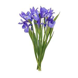 Cut Flowers Iris 10 Stem