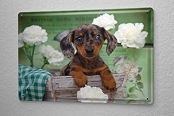 Blechschild Hunde Rasse Beagle