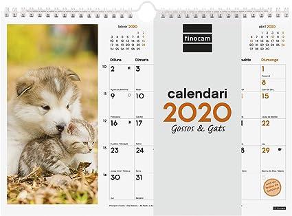 Finocam - Calendario de pared 2020 Imágenes Espiral 30x21 Perros y Gatos catalán: Amazon.es: Oficina y papelería