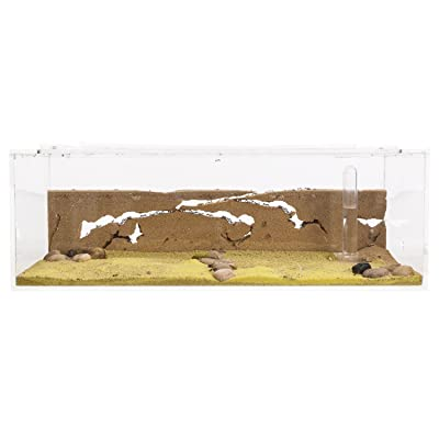 Sand Ant Farm Big - Anthill, Formicarium, Educational, Ants -: Toys & Games