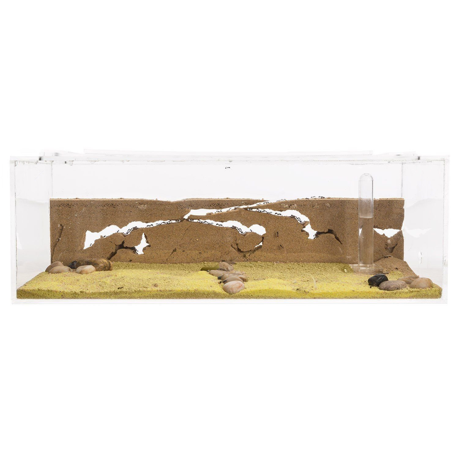 Sand Ant Farm Big - Anthill, Formicarium, Educational, Ants - by anthouse