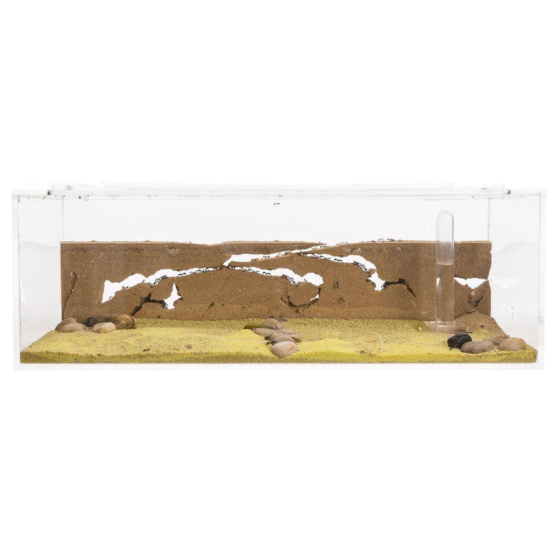 Sand Ant Farm Big - Anthill, Formicarium, Educational, Ants -