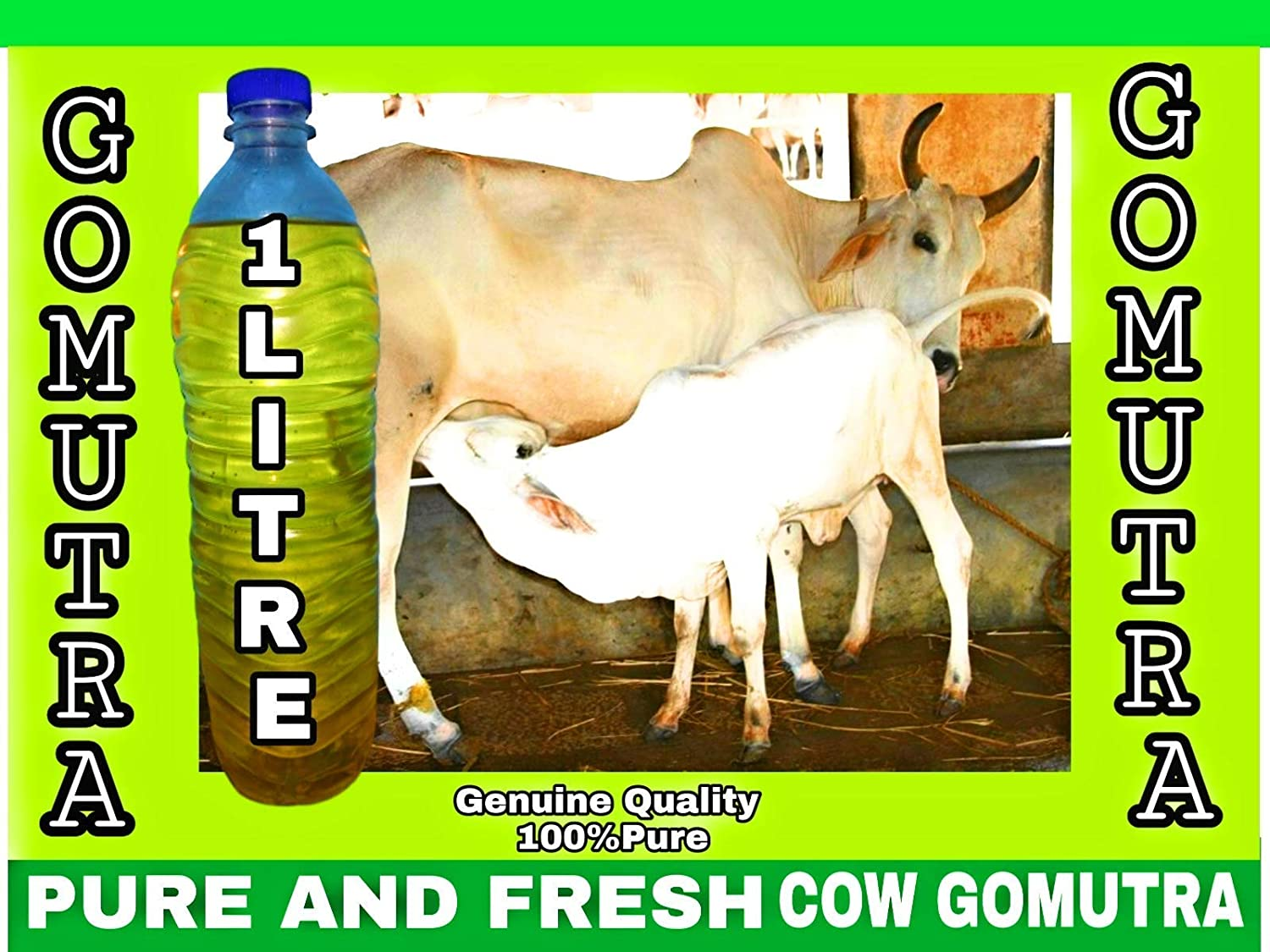 PURE AND FRESH COW URINE / GOMUTRA, 1Liter