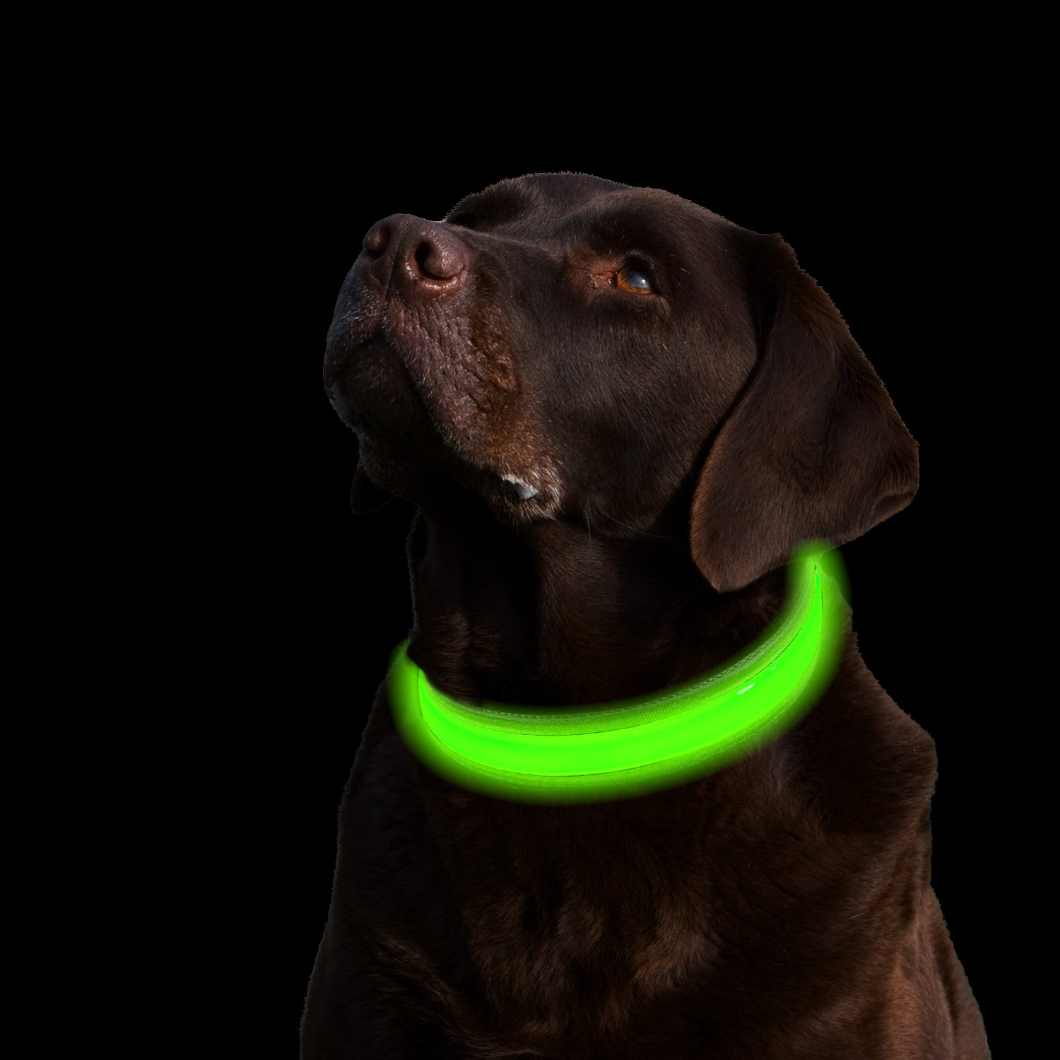 loop from tube rechargeable light night neck product com dog collar emours band led dark safety usb grow the waterproof dhgate up in fashing