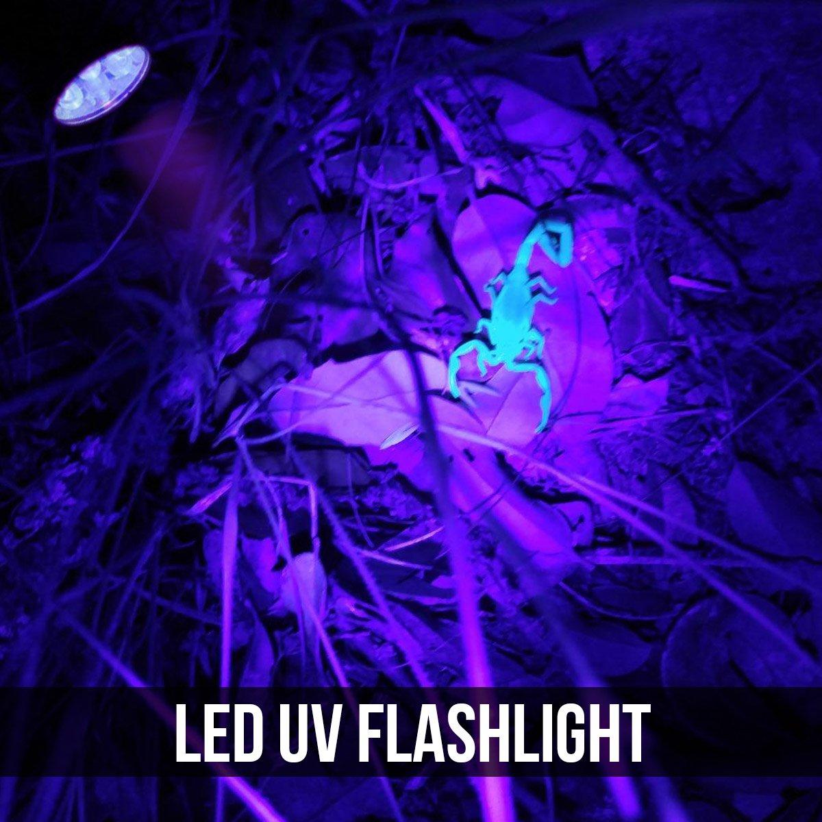 LE Ultraviolett LED UV Taschenlampe mit 12 LEDs 395nm Hund usw Handlampe UV-Strahler Pr/üfger/ät Fleckendetektor//Urindetektor f/ür Haustiere wie Katze