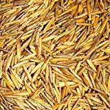 BINESHII-World Famous Ghost Wild Rice, The Finest And Rarest Wild Rice In The World. Hand Harvested, Wood Parched. 50-LBS Bulk, All Natural, Gluten Free, Harvesting Wild Rice For Nearly 50 Years.