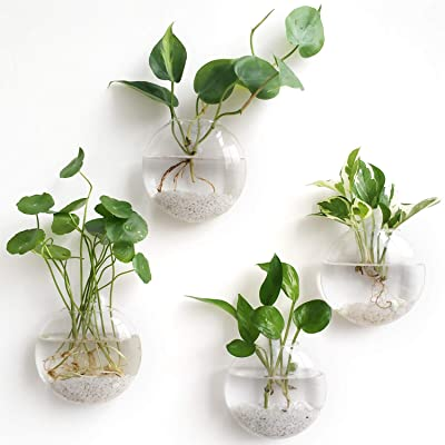Mkono 4 Pack Wall Hanging Glass Terrariums Planter Flower Vase for Hydroponics Plants, Home Office Living Room Decor, Oblate: Garden & Outdoor