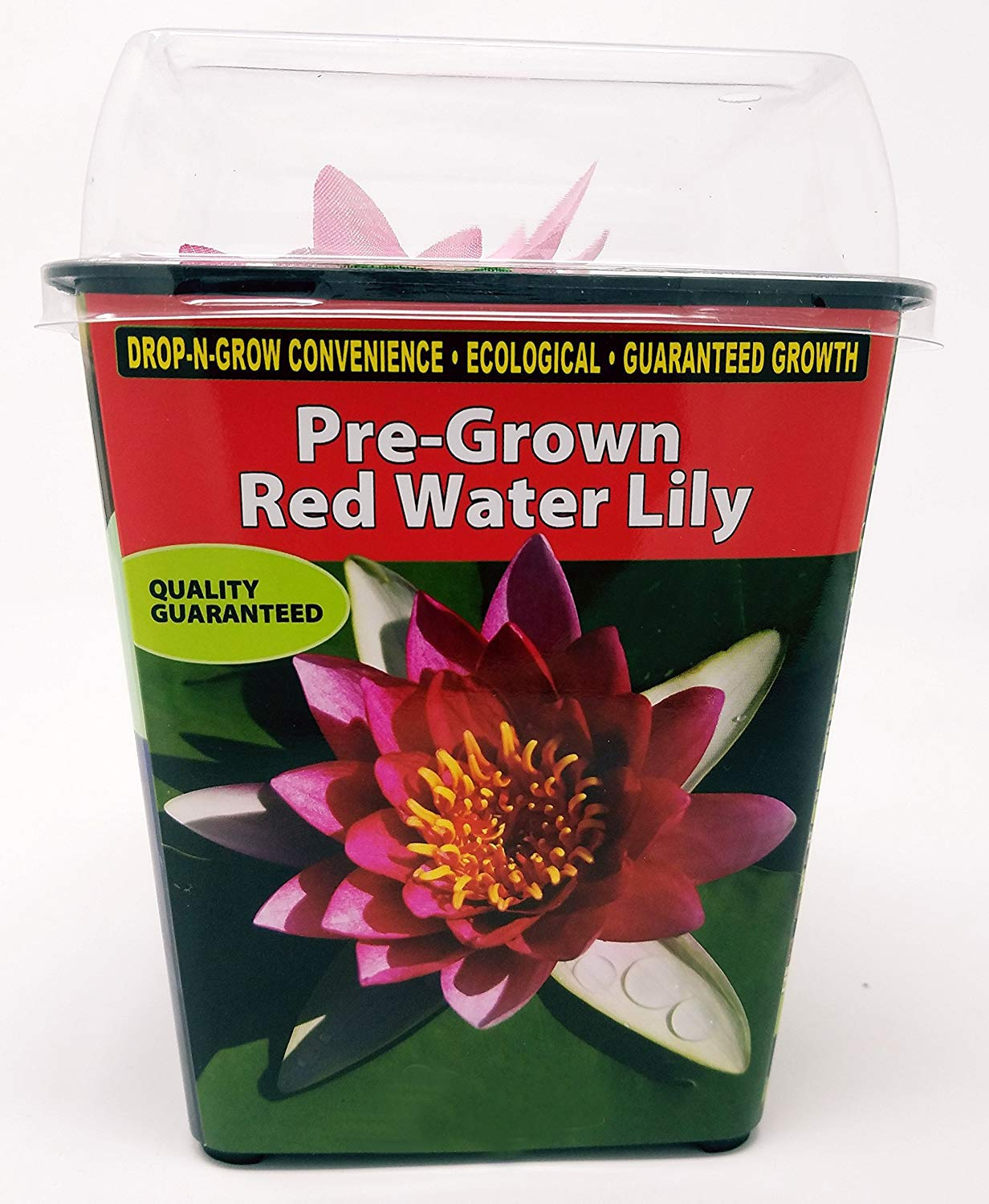 Live Water Lilies | Pre-Grown Hardy Lilies in White, Red, Yellow, Pink (Red) by AqualLeaf Aquatics (Image #2)