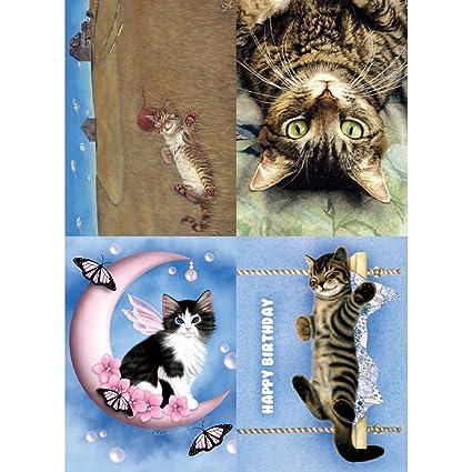 Amazon Tree Free Greetings Cat Dreams Birthday Card Assortment