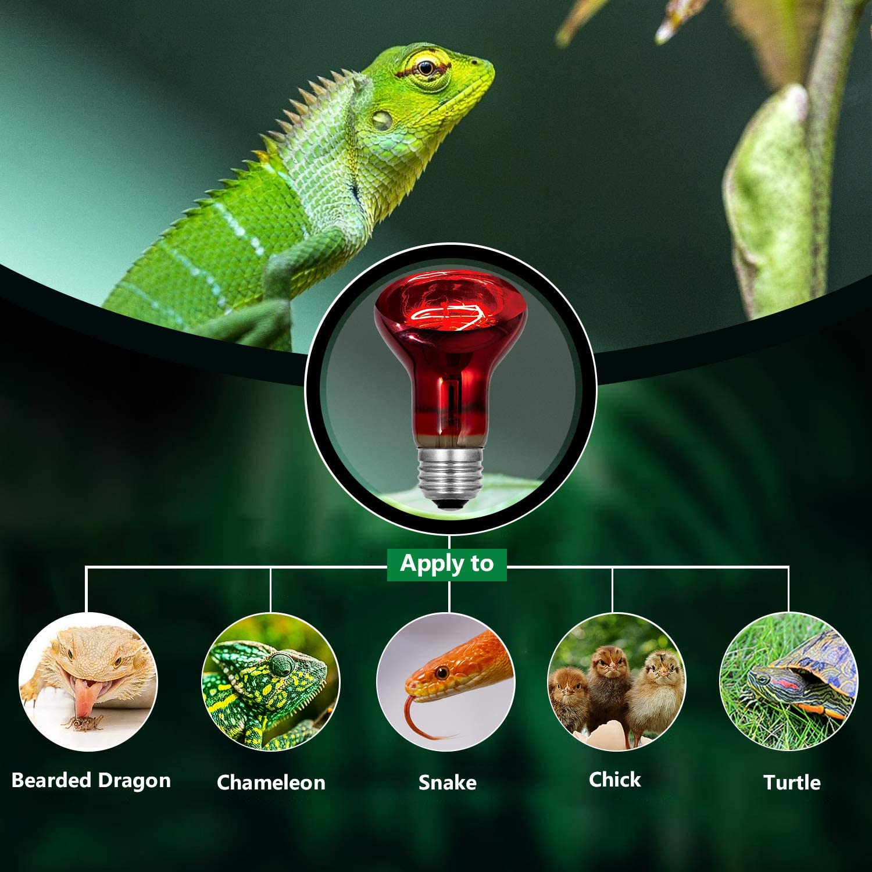 75W 2 Pack Infrared Heat Lamp Bulb Red Light Heat Bulbs for Pet Lizards Bearded Dragons Chameleons Snakes Reptiles /& Amphibians