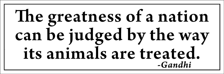 Gandhi Zitat Größe The Way Tiere Behandelt Bumper