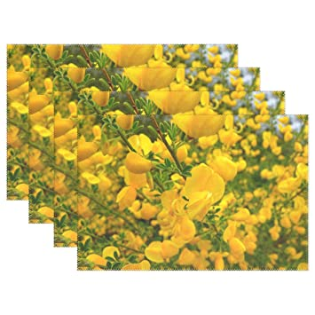 Amazon Broom Flower Yellow Smell Blossom Bloom Nature Placemats