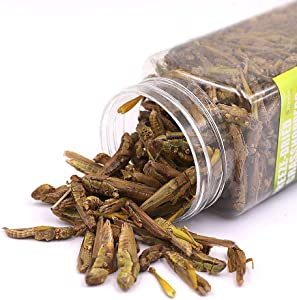 3OZ Freeze Dried grasshopper Reptile Food For Turtles, Bearded Dragon, Hedgehog ,Lizard, Chameleon, Birds