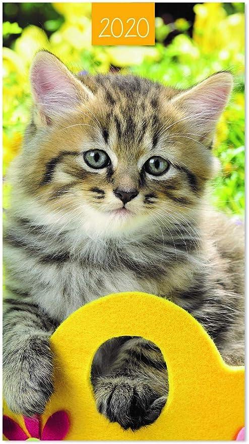 2019 Slim Pocket - Agenda de Gato con Vista semanal y Parte ...