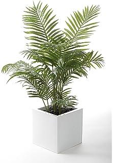 4c35014b74b Live Areca Palm Plant Fit 1 Quart Pot - Premium Foliage Houseplant - Easy  to Grow