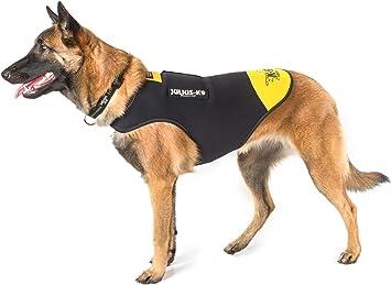 Julius-K9, Chaqueta de neopreno para perro IDC, Talla: M, Negro y ...