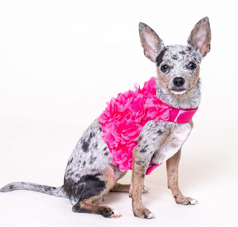 Lushpetz - Arnés para perro con pétalos de flor y correa a juego ...