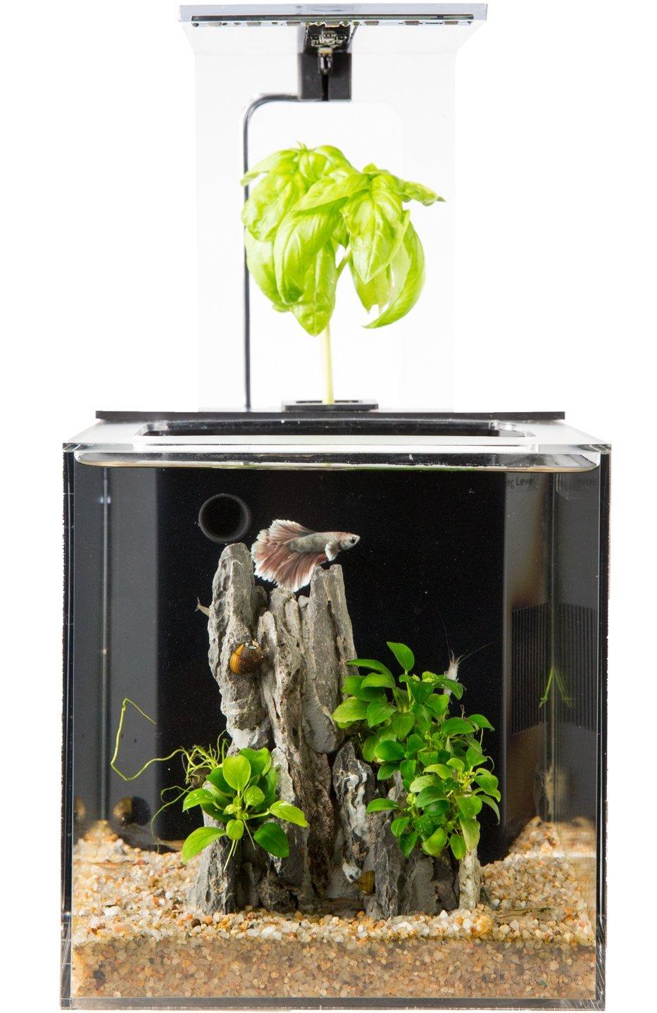 Fish aquarium price in india - Amazon Com Ecoqube Aquarium Desktop Betta Fish Tank For Living Office And Home D Cor Pet Supplies