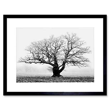 Amazon.com: Old Oak Tree Black White Mist Fog Photo Framed Art Print ...
