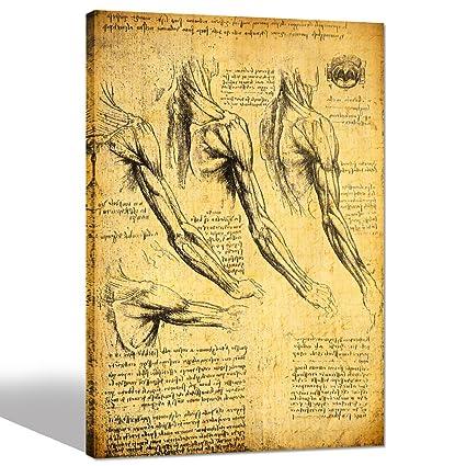 Amazon.com: Sea Charm- Anatomy Art by Leonardo Da Vinci Giclee ...
