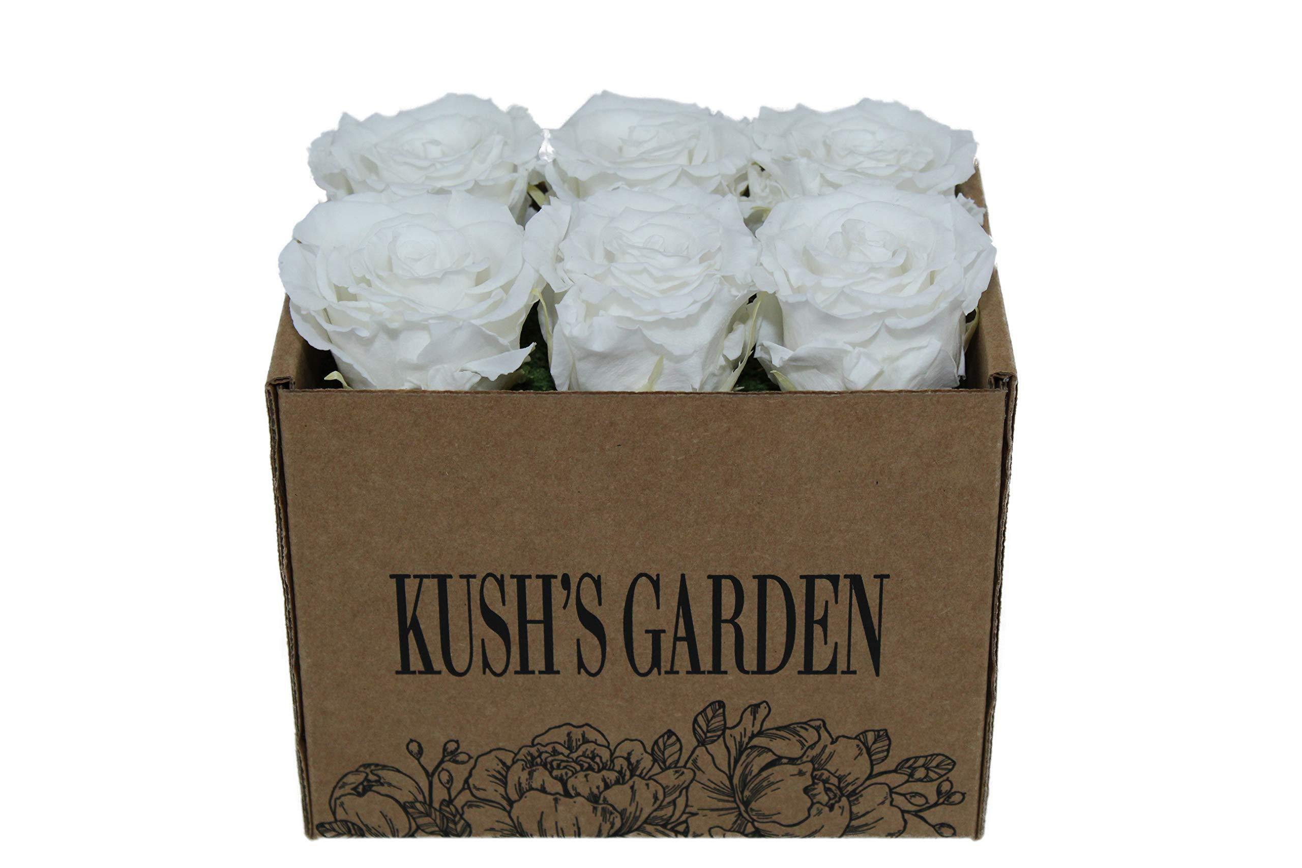 KUSHS GARDEN Real Preserved Roses in Box (Ice King White)