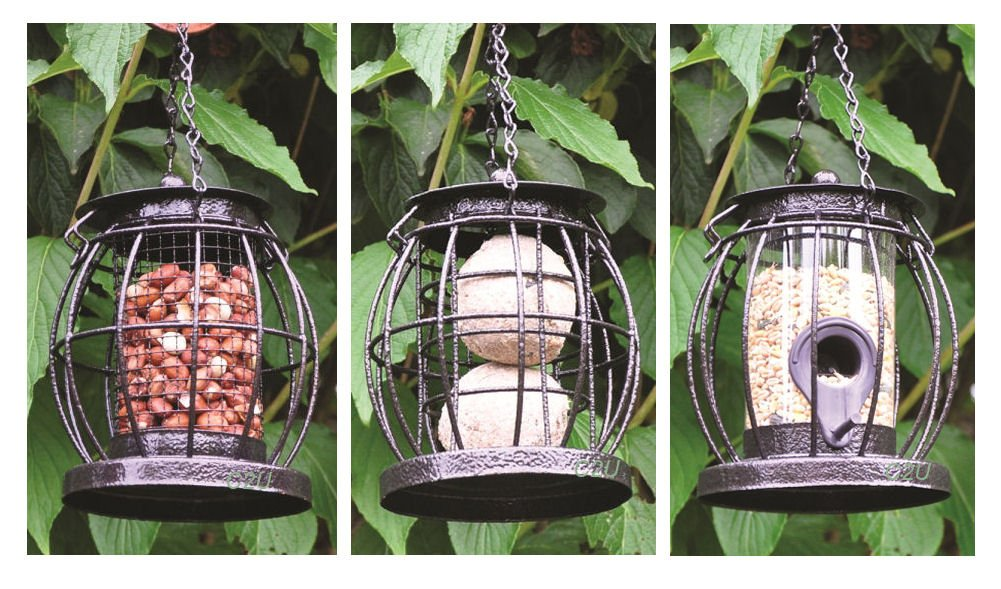 dome birds seed suet feeder supper choice and mealworm food house bird