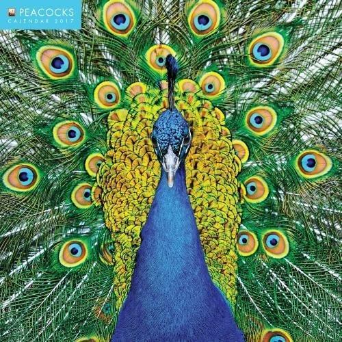 peacocks-2017-square-flame-tree