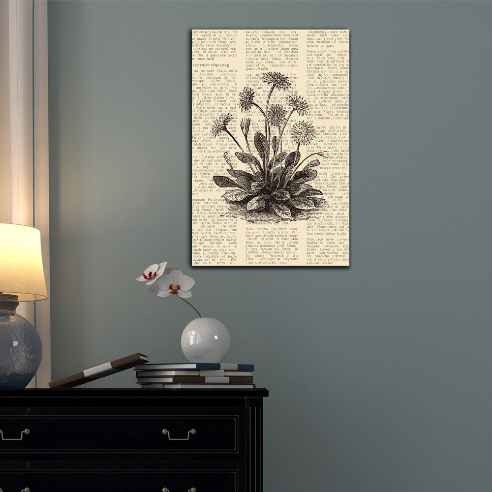 Amazon.com: wall26 - Canvas Wall Art - Daisy or Bellis Perennis, Vintage Engraved Illustration - Gallery Wrap Modern Home Decor | Ready to Hang - 24x36 ...