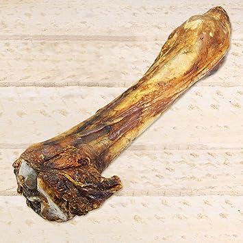 Pferdeknochen XXL Länge ca 35 cm Große schwere Beinknochen vom Pferd ...