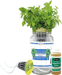 Napolitano Basil Herb Growing Kit by Hydrohort | Growing Herbs is Easy with Our Mason Jar Hydroponics Kit | Our Mason Jar Kits are a Complete Hydroponic Starter Kit for Your Hydroponic Herb Garden