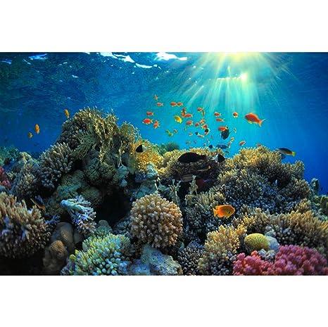 Cassisy 3x2m Vinilo Submarino Telon de Fondo Especies Marinas Arrecife de Coral Pez Tropical Rayo de