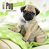 Pug Puppies 2017 Calendar