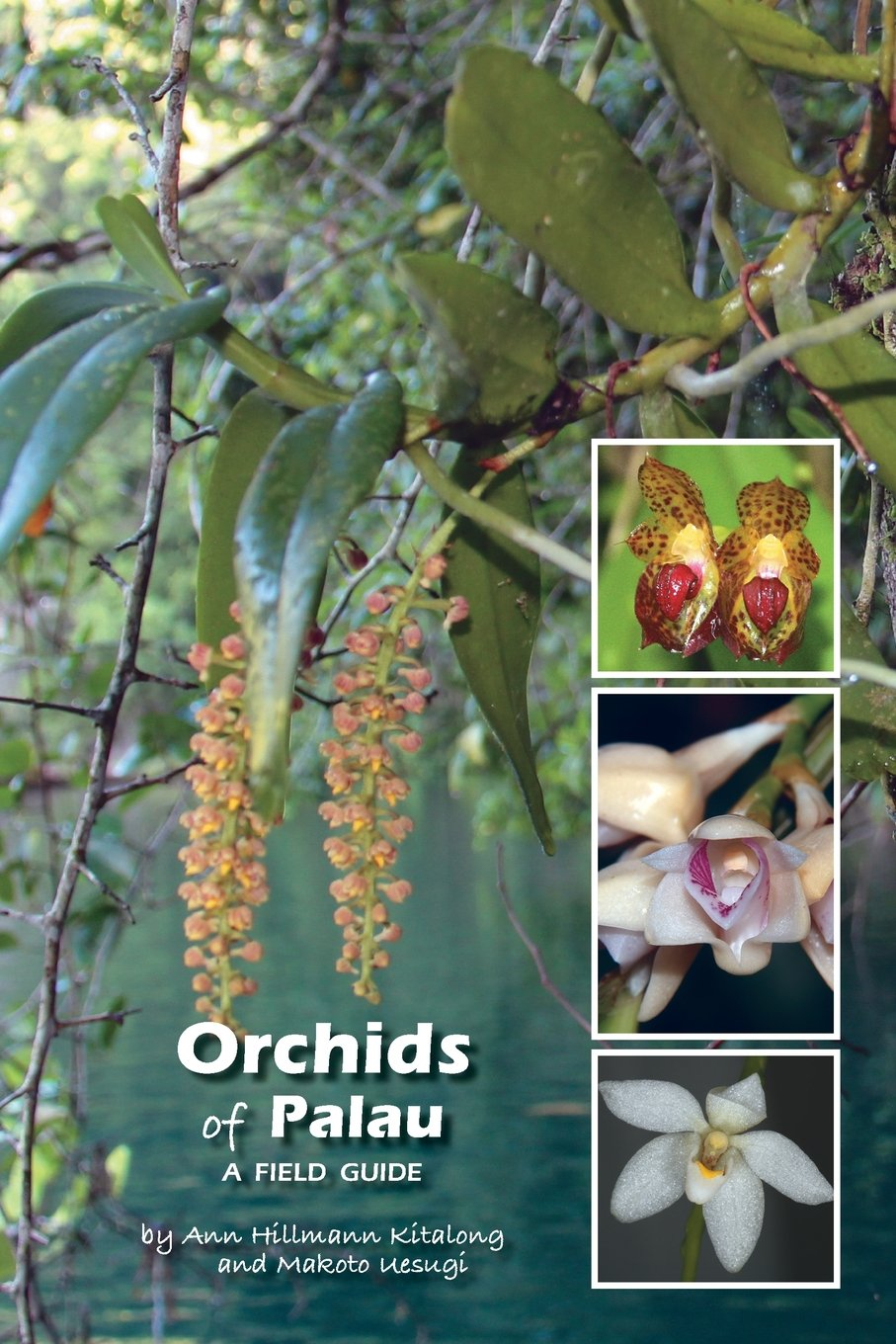 Download Orchids of Palau: A Field Guide ebook
