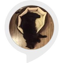 Cat Raiser