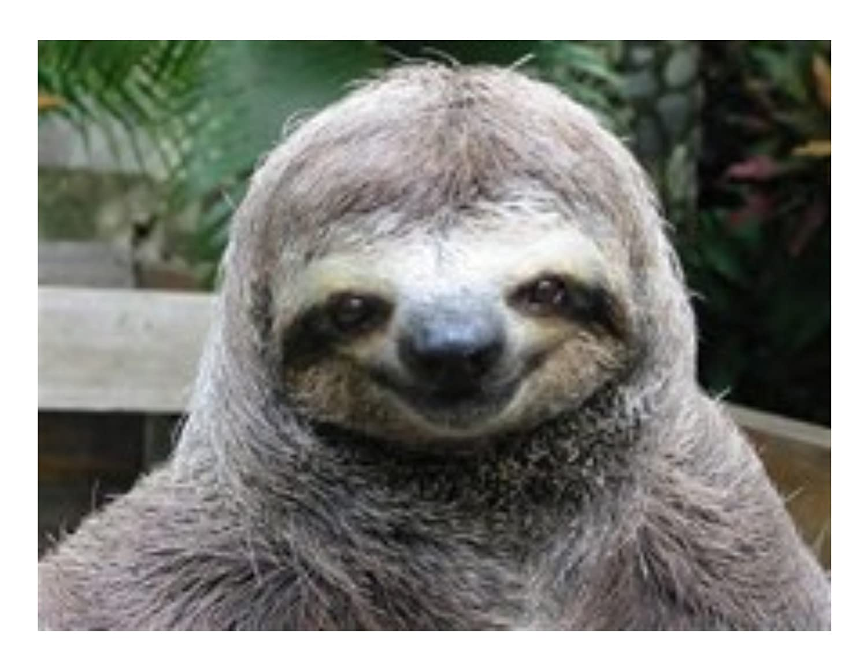 Whimsical Practicality 1/4 Sheet Cake - Smiling Sloth Animal Birthday - Edible Cake or Cupcake Topper