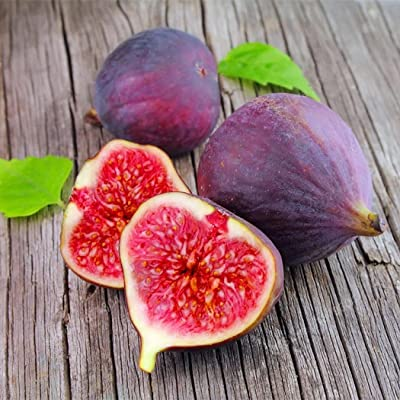 HOTUEEN 50pcs Fig Tropical Seeds Ficus Carica Seeds Bonsai Rare Fruit Seed Home Planting Bonsai : Garden & Outdoor