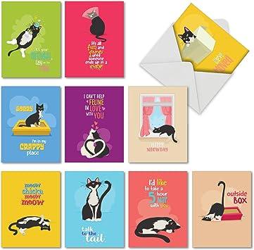 Amazon.com: 10 tarjetas de felicitación para gatos con ...