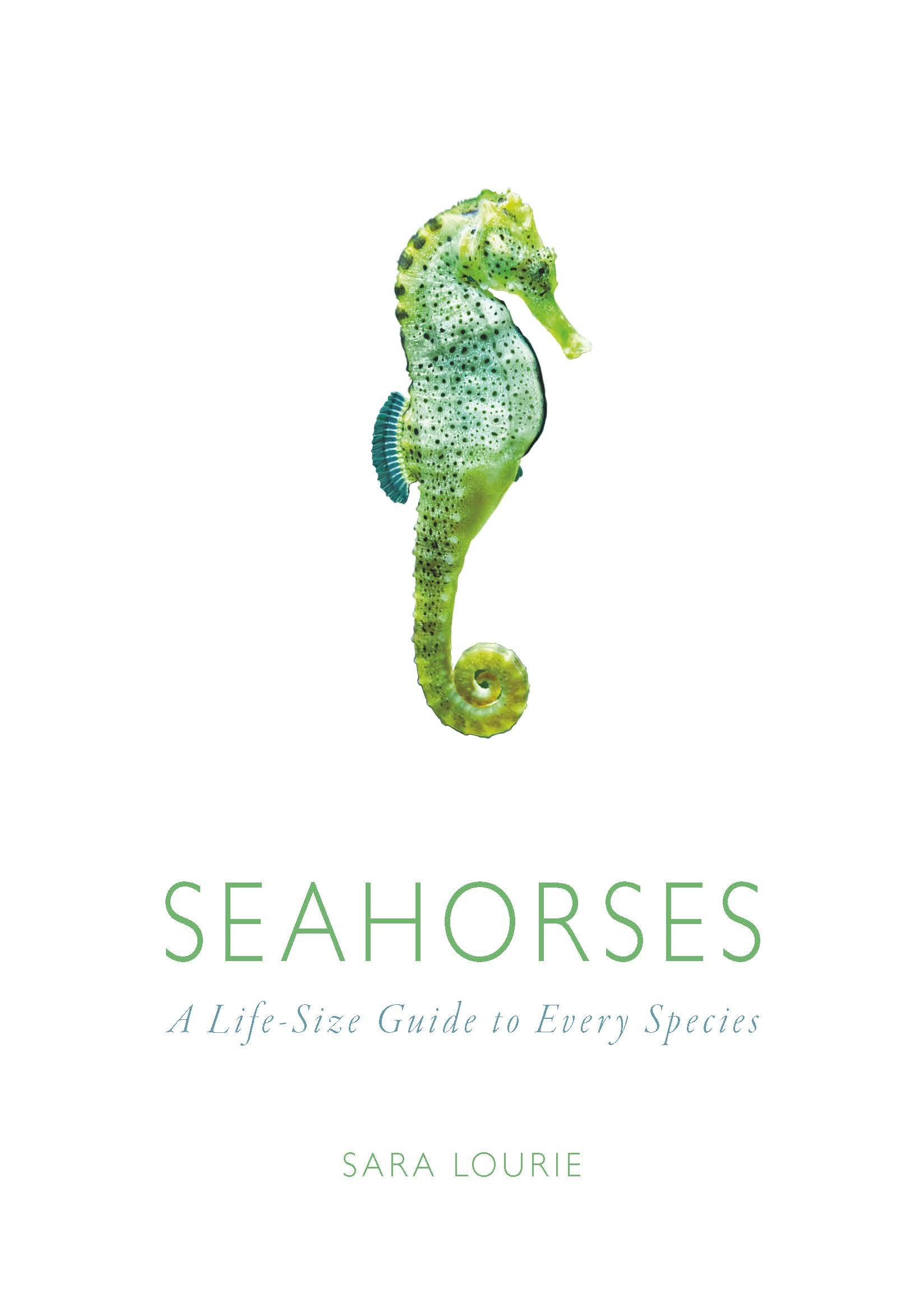 seahorse essays Join us today or show your support with a monthly donation support the marinebio conservation society with your support, most seahorse essays.