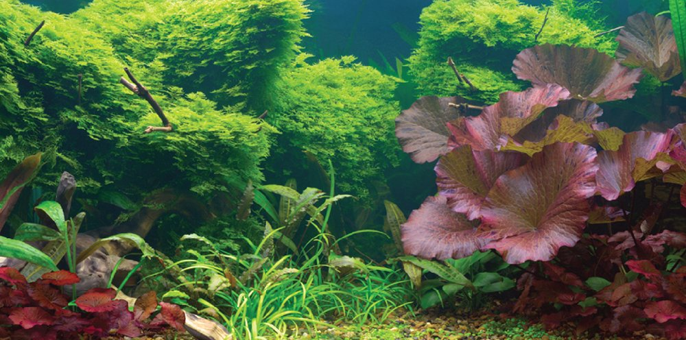 Aquatic Creations Static Cling Aquarium Background, 60cm By 30cm , Tropical New