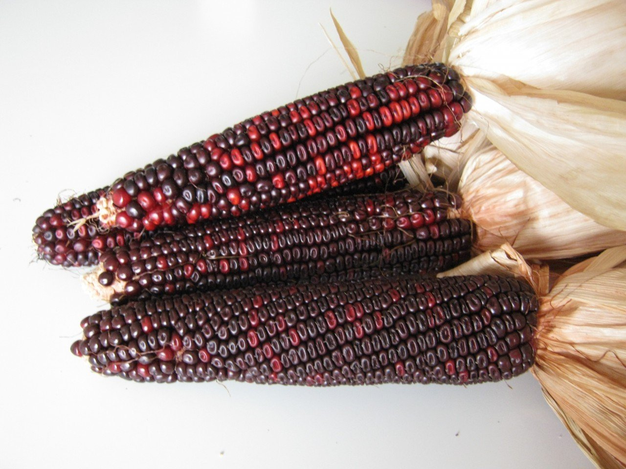 Amazon.com : Bloody Butcher Sweet Corn 50 Seeds   An Old Heirloom By Seeds  And Things : Corn Plants : Garden U0026 Outdoor