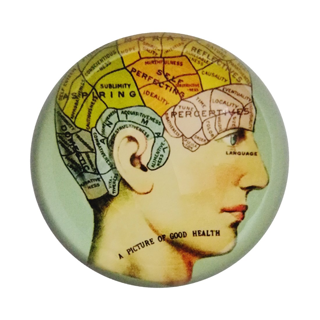 MICG Crystal Hemisphere Brain Phrenology Paperweight Galss Home Office Table Decoration