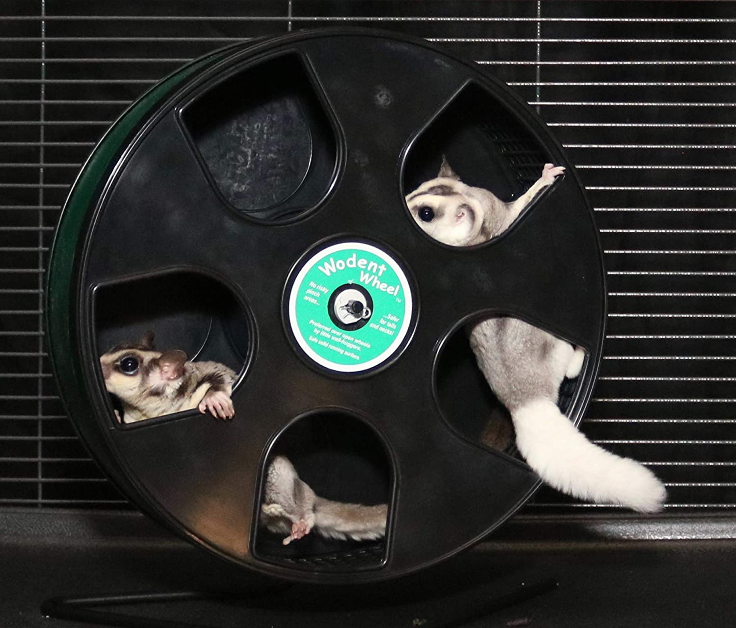 With Nail Trimming Inserts Sugar Glider Wheel Baby Raptor 9.5