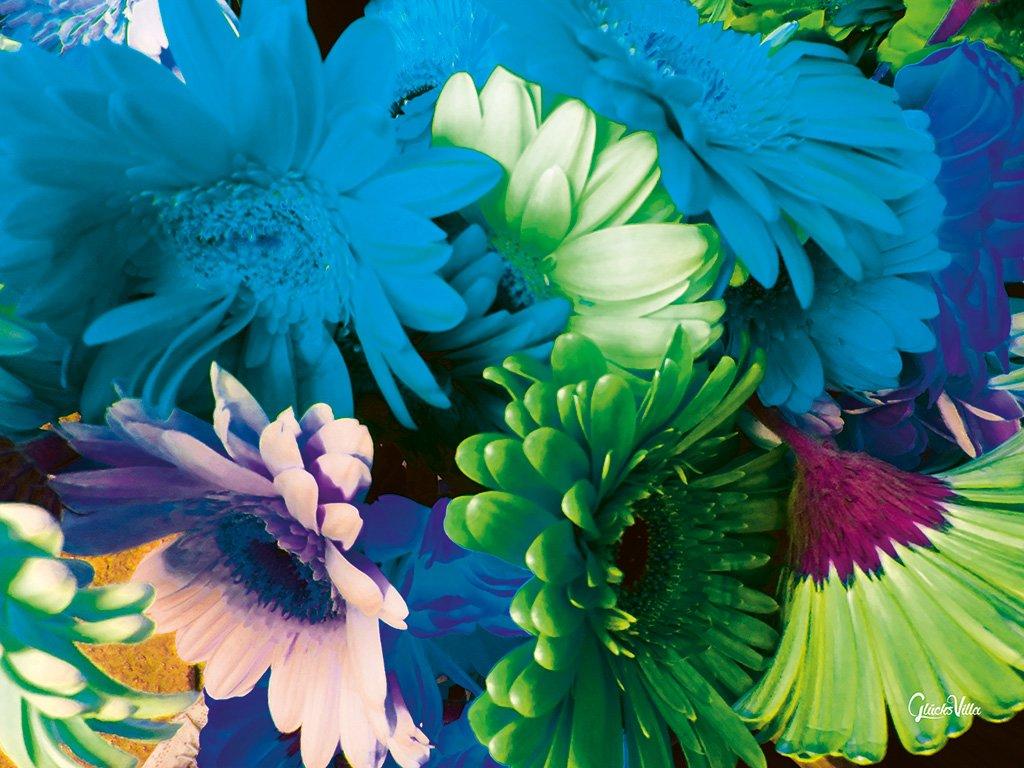 Gerbera Blumen Bild Bilder Leinwand Keilrahmen Wandbild Kunstdruck