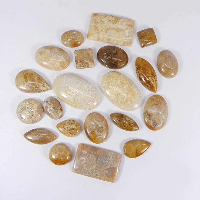Designer Fossil Coral Natural Fossil Coral Cabochon Lot Very Rare Fossil Coral Gemstone Wholesale Lot Fossil Coral  for Wire wrapping,
