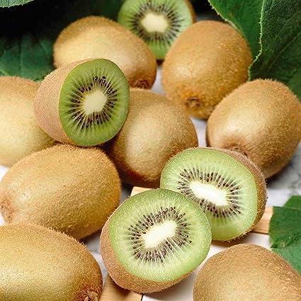 Floral Treasure Kiwi Fruit Plant Seeds - Pack Of 25