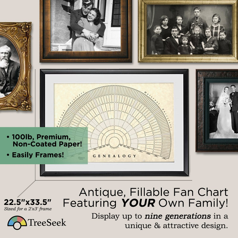 Amazon treeseek genealogy fan wall chart large blank amazon treeseek genealogy fan wall chart large blank fillable pedigree form for family history and ancestry home kitchen jeuxipadfo Gallery