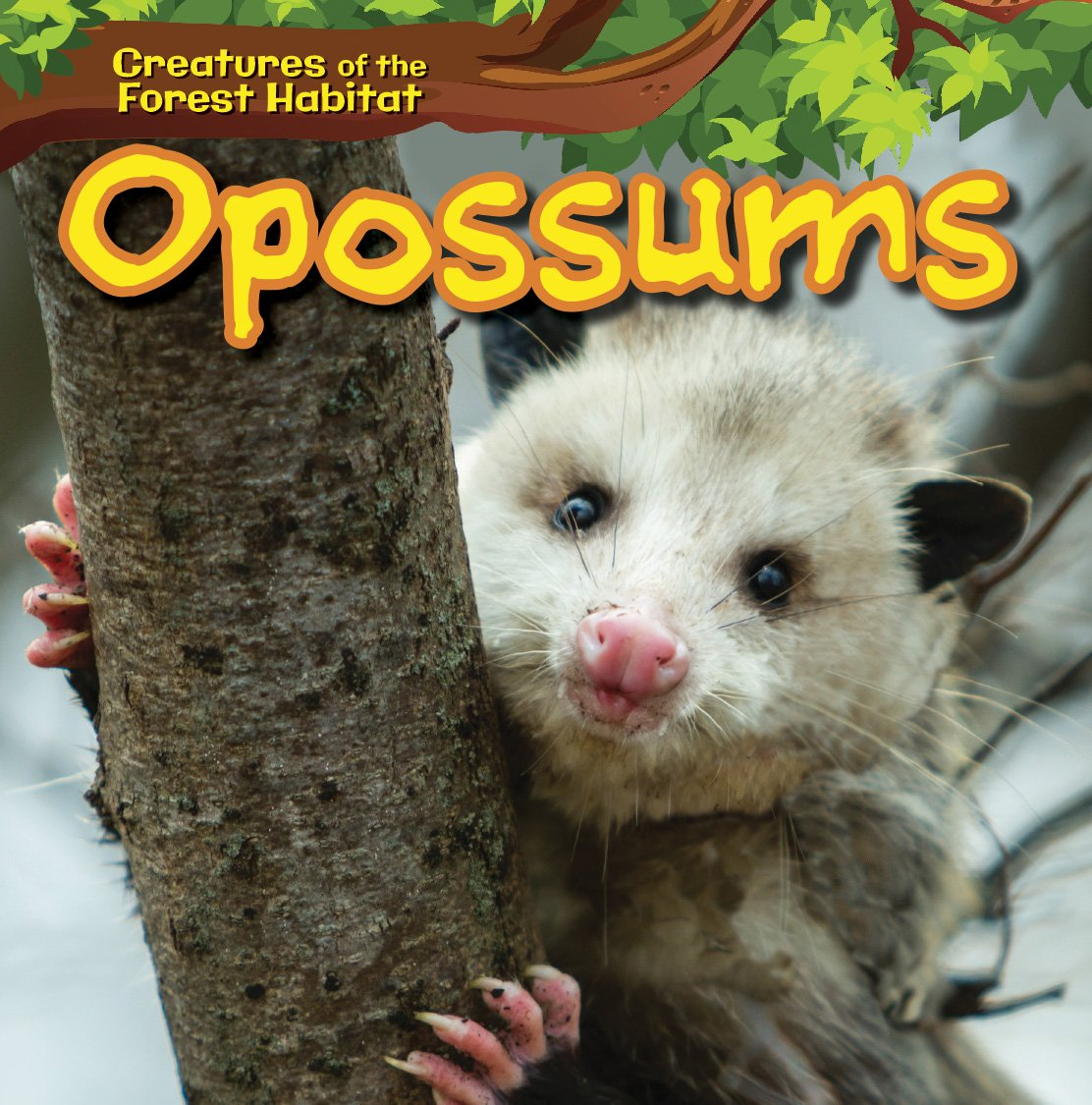 Opossums (Creatures of the Forest Habitat): Ada Quinlivan
