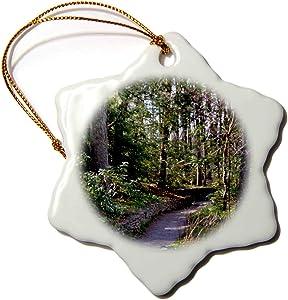 3dRose A Path in The North Carolina Botanical Garden - Ornaments (ORN_160962_1)